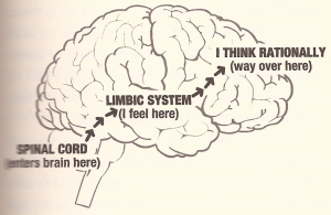 Our limbic (or reptilian brain) creates the physical responses to emotions. All too often then our thinking brain creates meaning of those experiences and responses. Rarely the other way around.